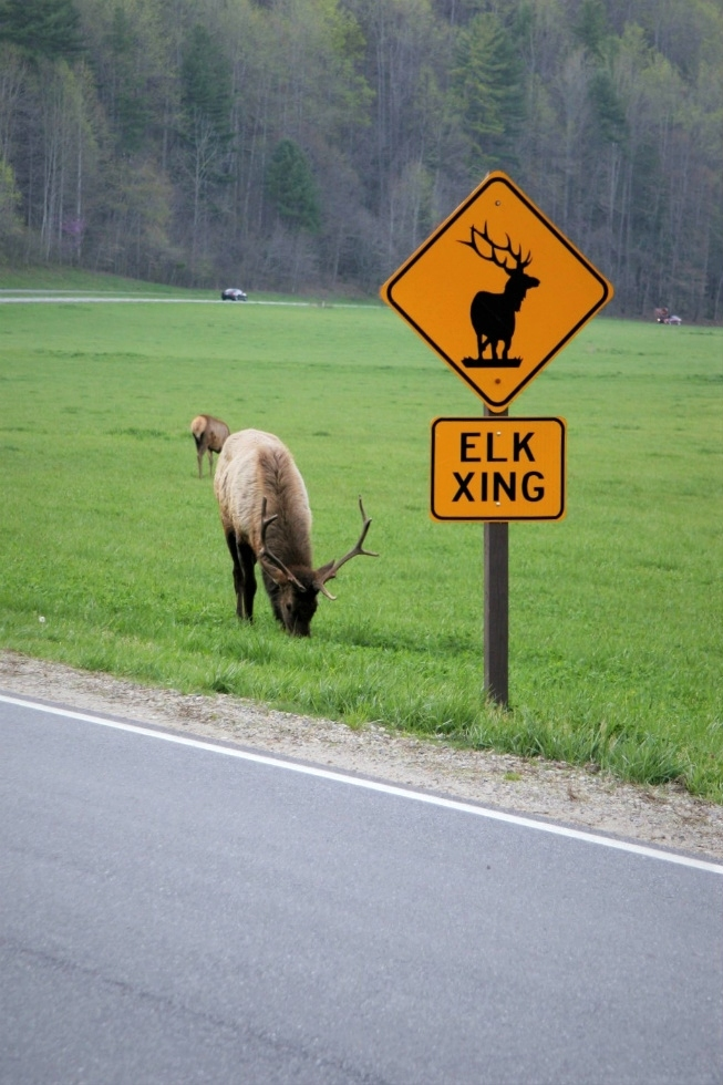 Erin Carder Tennessee Elk