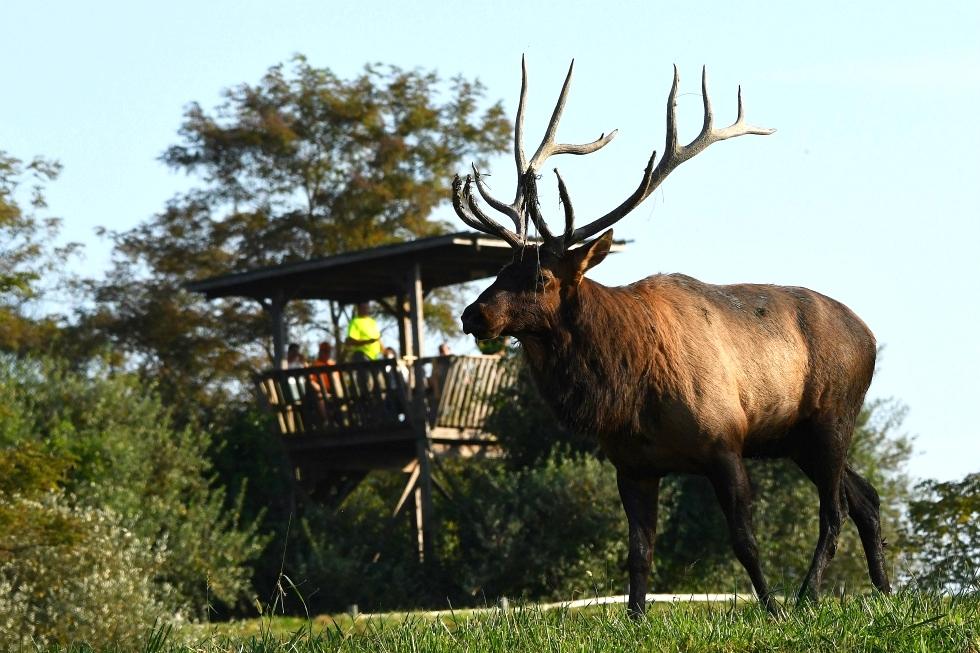 Elk Viewing Tower Tennessee Elk