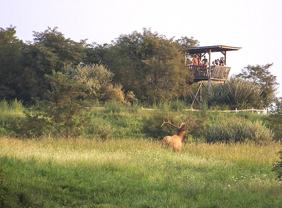 Tennessee Wildlife Federation Tennessee Elk