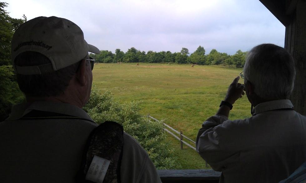 Hatfield Knob Viewing Tower Tennessee Elk