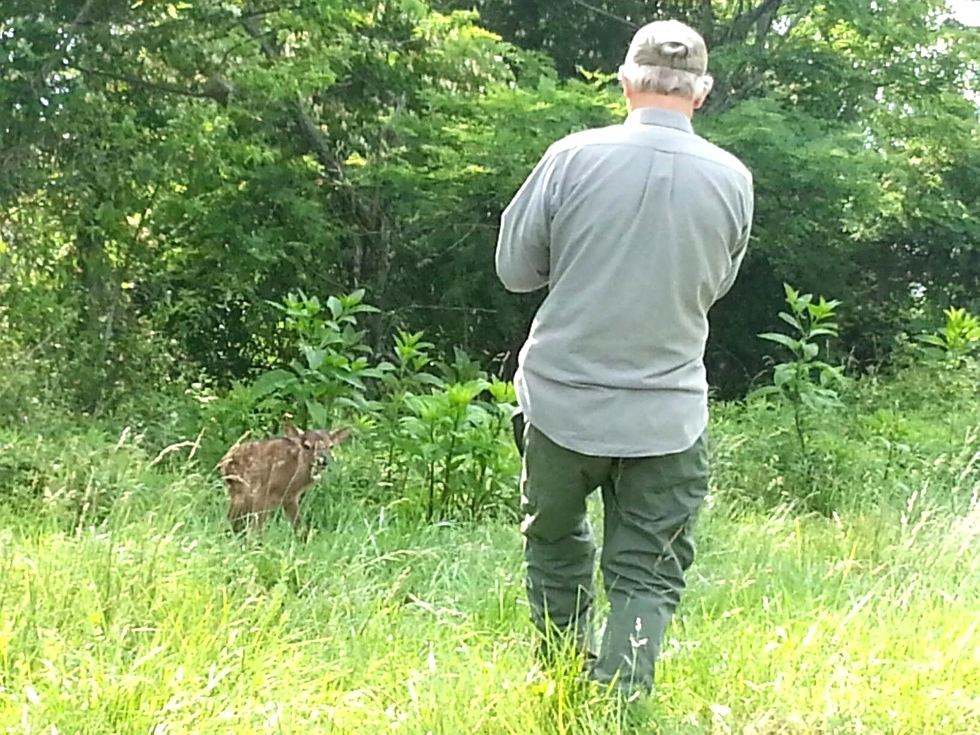 Calf born the day after the HC visit Tennessee Elk